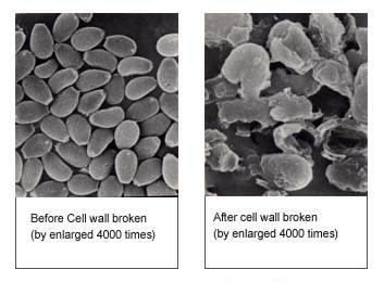 cell broken